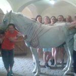 Kurs masażu koni '15
