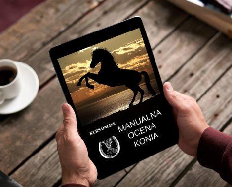 Kurs Manualna Ocena Konia